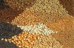 Семена сонник