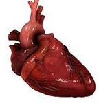 Сердце сонник