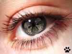 Глаз сонник