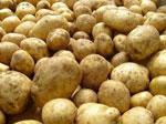 Картофель сонник