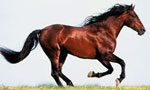 Конь сонник