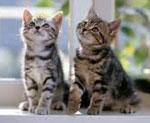 котята кошки коты и сонник