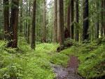Лес сонник