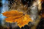 Мокрый сонник