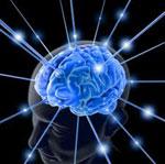 Мозг сонник