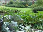 Огород сонник