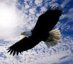 Орел cонник