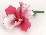 Орхидея сонник