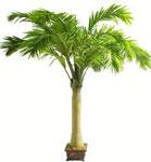 Пальма сонник