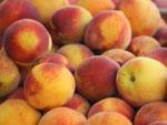 Персик сонник