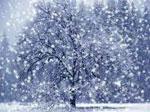 Снег сонник