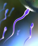 Сперма сонник